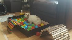 ball pit for digging enrichment. sprinkle a few treats in and watch bunny play ball pit for digging enrichment. sprinkle a few treats in and watch bunny play Bunny Cages, Rabbit Cages, House Rabbit, Rabbit Toys, Pet Rabbit, Diy Bunny Toys, Diy Toys For Rabbits, Hamsters, Bunny Room