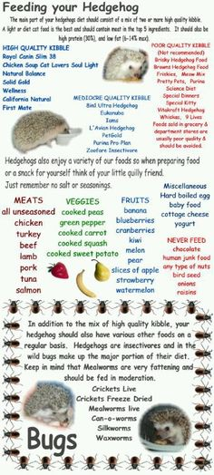 Feeding your hedgie. We can't have hedgies in CA, but if I ever move, I want to go to hedgehog country and this will be helpful!