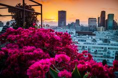 Sunset view from the Ace hotel rooftop bar in Downtown Los Angeles, California