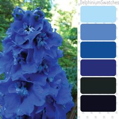 Color swatches picked from Dephilium-blue flowers. Enjoy!