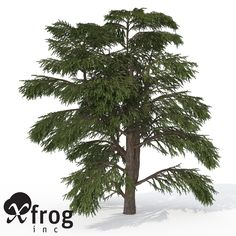 Lebanon Cedar Tree 3D Model - 3D Model
