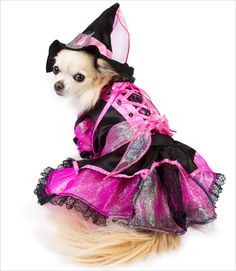 Shiny Pink Witch Costume for Dogs