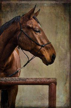 Title  Arty   Artist  Barbara Manis   Medium  Photograph - Photography
