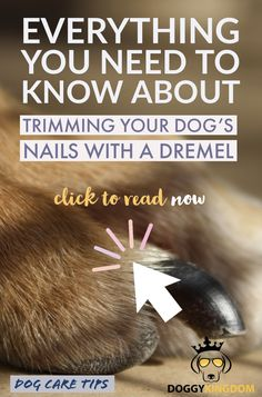 Are you looking for tips to cut your dog's nails at home? Nervous about cutting your cat's nails? Check out this post with step by step instructions to cut your pet's nails safely! #howtocutdogsnails #cuttingdogsnailsdiy #tipsforcuttingdogsnails #howtocutcatnails #bestwaytocutcatsnails #tipsforcuttingcatsnails Dog Lover Gifts, Dog Lovers, Group Of Dogs, Dog Health Care, Dog Nails, Nails At Home, Dog Care Tips, Dog Recipes, Outdoor Dog