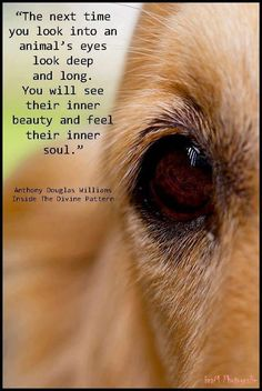 Or that dog might bite your face off. But I love this quote anyway.