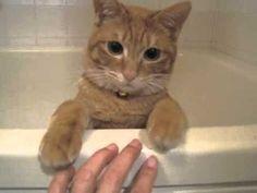 猫ゆっくり沈む - YouTube