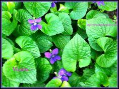 Violet Medicine