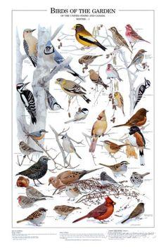 Birds of the Garden Winter I Prints at AllPosters.com