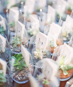 tiny succulents in glasses hold escort cards for the wedding reception - Melissa Jill Photography