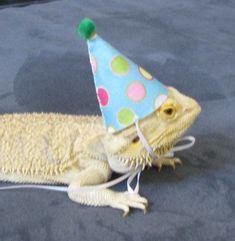 Handmade Felt Bearded Dragon Birthday Hat by PamperedBeardies $2.00