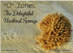 "Great ""physiology lesson"" re the urethral sponge and women's orgasms - from Pearl's Oyster Bed"