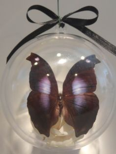 """""""Hamanida jacunda"""" from Peru           The Penguin Butterfly (do you see a side view of a penguin on each side of the wings?)  100 mm clear ornament $30.00 US Butterfly Ornaments, Clear Ornaments, Side View, Penguin, Peru, Wings, Crafts, Turkey, Manualidades"""