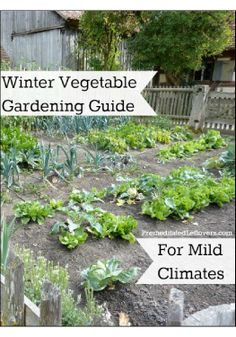Winter vegetable gardening can be done successfully with a little planning and preparation.