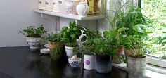 3 Best Kitchen Herbs To Grow And Their Uses