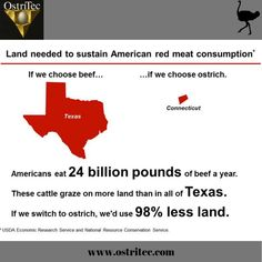 Americans eat 24 billion pounds of beef a year. These cattle graze on more land than in all of Texas. If we switch to ostrich meat, we'd use less land.