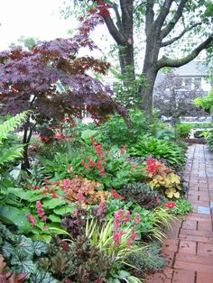 Shade garden - Heuchera, hostas, coral bells, japanese forest grass, brunnera