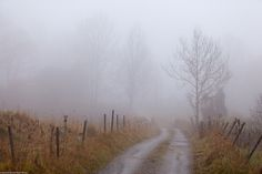 Into the mist on Flickr.