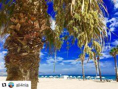 """Otra semana más de otoño suave en Benidorm en la provincia de """"Alifornia"""" ⛅️😃 ¡Nada que envidiar a las costa oeste americana! Te esperamos.  #HotelCentroMar #CentroMar #HotelBenidorm #Hotel #HotelesBenidorm #Hoteles #CostaBlanca #Playa #PlayaBenidorm #CiudadBenidorm #TurismoCostaBlanca #Turismo #Benidorm #Benilovers"""