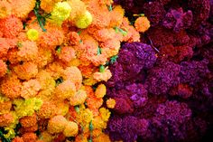 Morelia, Michoacan, Mexico Flowers used in Mexico for The Day of The Dead.
