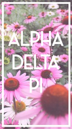 ... about Srat asf on Pinterest | Cover photos, Sorority and Mallard ball