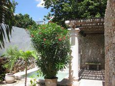 Ponce Renovated Home