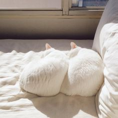 (lol)Cats in Love : Photo Crazy Cat Lady, Crazy Cats, Kittens Cutest, Cats And Kittens, Kitty Cats, Pics Of Cute Cats, International Cat Day, Cat Tags, Cat Aesthetic