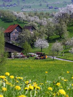 Spring in the farm - Switzerland