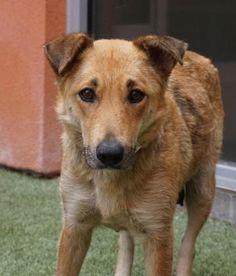 6 / 13     Petango.com – Meet Missy, a 4 years Shepherd / Mix available for adoption in FARMINGTON, NM Address  133 Browning Parkway, FARMINGTON, NM, 87401  Phone  (505) 599-1098  Website  http://www.fmtn.org/prca  Email  svoss@fmtn.org