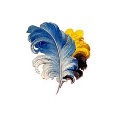 Victorian Graphics Colorful Feathers Plumes ❤ liked on Polyvore featuring feathers, backgrounds, filler, wings and accessories