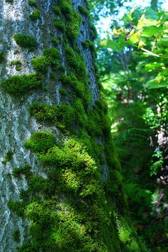 ✶Beautiful mossy tree trunk!✶