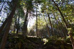 Bass Lake Trail - Ely, MN