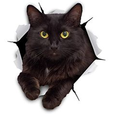 Buy Winston & Bear Cat Stickers 2 Pack Cheeky Black Cat Decals for Wall Cat Lover Gifts Stickers for Bedroom Fridge Toilet Car Retail Packaged at Wish - Shopping Made Fun 3d Wall Decals, Wall Stickers Murals, Cat Stickers, Cat Lover Gifts, Cat Gifts, Cat Lovers, Black Cat Day, Black Cats, Scrap