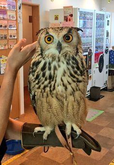Owl +_+