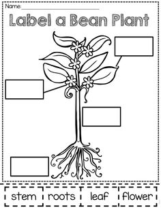 Click to see printable version of Jasper and Beanstalk