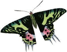 Baru 30 Gambar Kartun Ulat Bulu Ulat Gambar Unduh Gambar Gambar Gratis Pixabay Download Ulat Menjadi Kupu Kupu Mengenal Metamorf Gambar Kartun Kartun Bulu