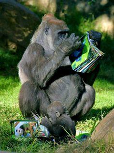 ふむふむふむ。ほうほうほう。 ♂ Kokomo and Monroe reading about Nature - education starts from young age :-)