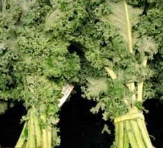 """Health Benefits of Kale I'm not a """"greens"""" eater, mustard/collards etc., but kale is very good."""