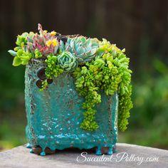 22 Ideas For Succulent Art Diy Succulent Gardening, Succulent Terrarium, Container Gardening, Cacti Garden, Indoor Gardening, Succulents In Containers, Cacti And Succulents, Planting Succulents, Cactus Plants
