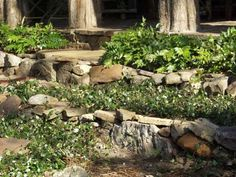 I would like for the lower growing plants like Jasmine and Lantana to have some rocks around it.