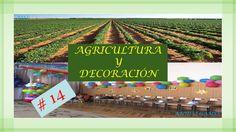 AGRICULTURA Y DECORACION   EPISODIO 14   BUSCAMOS MÁS SEMILLAS