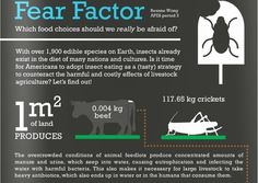 edible insects infographic - Google Search