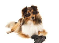 Dog Shoots Man - Sheridan, Wyoming 2014