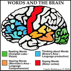 Linda Robinson: Our Words: See Hear Think Say Different parts of the brain are used when interacting with language. Speech Language Therapy, Speech Language Pathology, Speech And Language, Speech Therapy, Aphasia Therapy, Brain Anatomy, Anatomy And Physiology, Pilou Pilou, Brain Based Learning