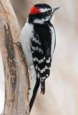 February 17-20 The Great Backyard Bird Count