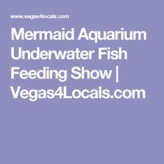 Mermaid Aquarium Underwater Fish Feeding Show | Vegas4Locals.com