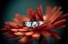 surreal Wedding photography - Incredible detail, color and shading are apparent in these HDR wedding photos by the talented Jon-Mark. Engagement Ring Photography, Wedding Photography List, Engagement Photos, Jewelry Photography, Photography Ideas, Wedding Photoshoot, Wedding Pics, Wedding Bands, Wedding Ceremony