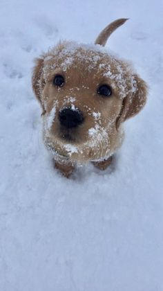 Dogs And Puppies Baby Animals Ideas For 2019 Baby Animals Pictures, Cute Animal Pictures, Animals And Pets, Animals In Snow, Animals Images, Cute Little Animals, Cute Funny Animals, Funny Dogs, Cutest Animals