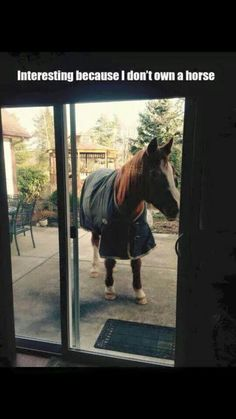 The patio horse comes in chestnut, complete with all weather covering.  The perfect accent for any patio.