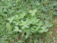 north american forest plant life - Google Search