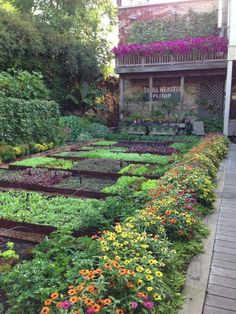 This is very pleasing to me. Love the line of zinnias and parsley.